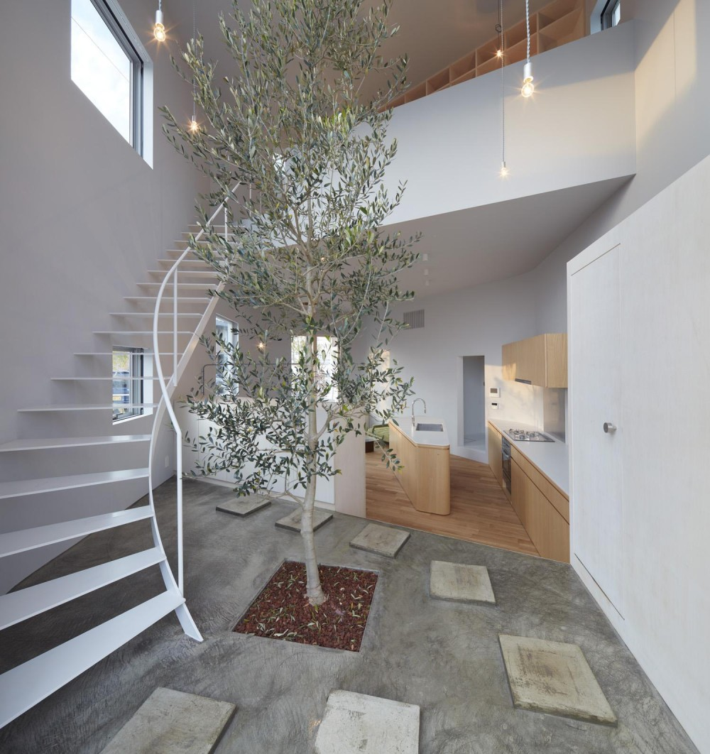 玄関にあるシンボルツリー (大口の家 / 五角形の曲線を持つデザイナーのアトリエハウス)