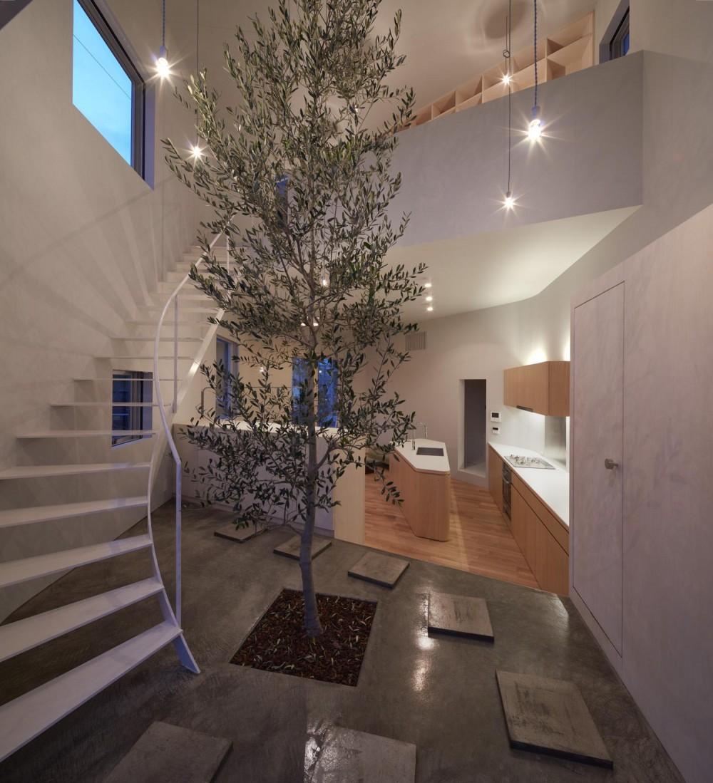 大口の家 / 五角形の曲線を持つデザイナーのアトリエハウス (玄関にあるシンボルツリー-ライトアップ)