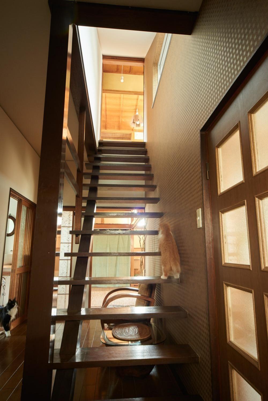 ネコと住まう (階段)