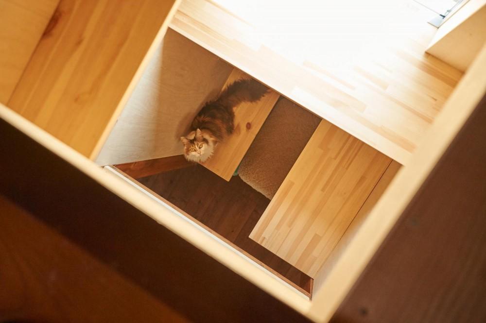 工務店:QUMUQ「ネコと住まう」