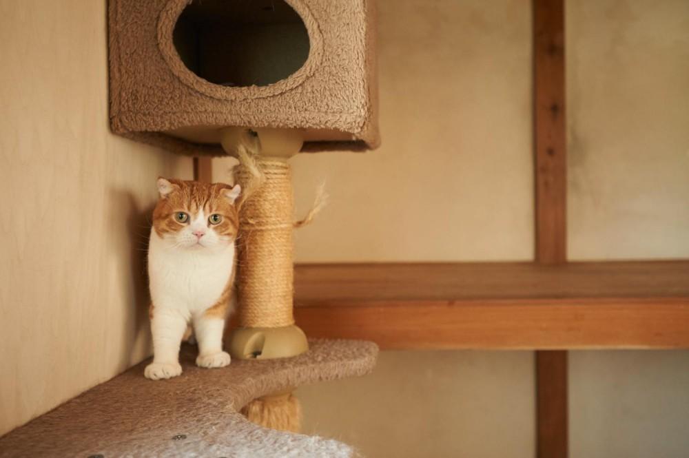 ネコと住まう (ネコと暮らす)