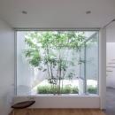 立体市松壁の家の写真 坪庭