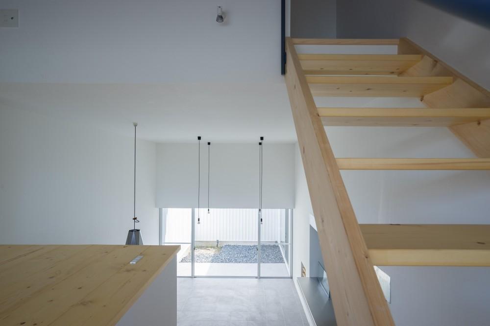『グロット』スキップフロアでつながる一体的内部空間 (階段)