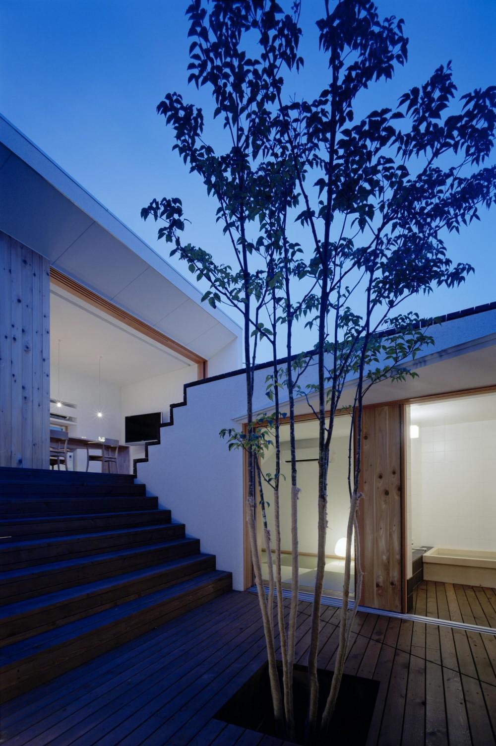 階段テラスが中庭と屋上をつなぐ家 (中庭から屋上へと続く中庭の風景)