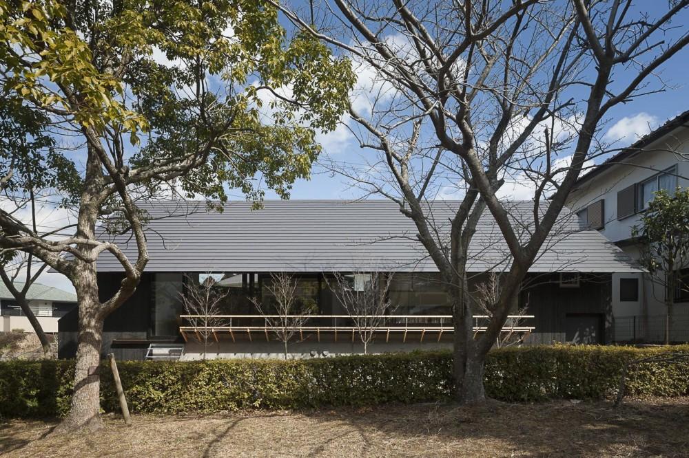 緑道に開かれた深庇と縁台のある家 (緑道からの外観)