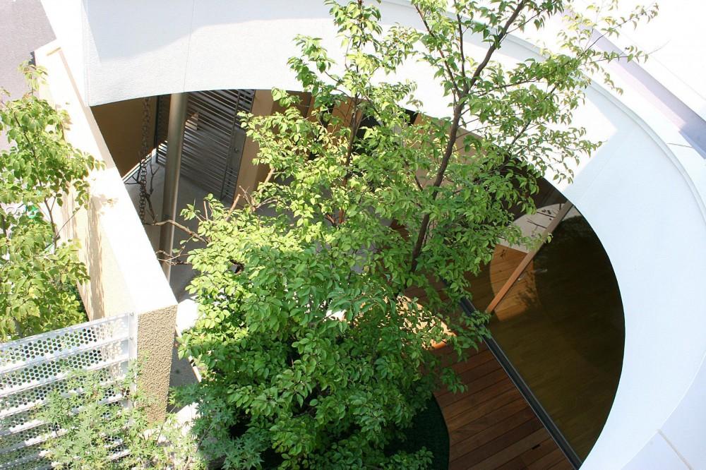 薬師の住宅 ((親世帯)バルコニーより中庭を見下ろす)