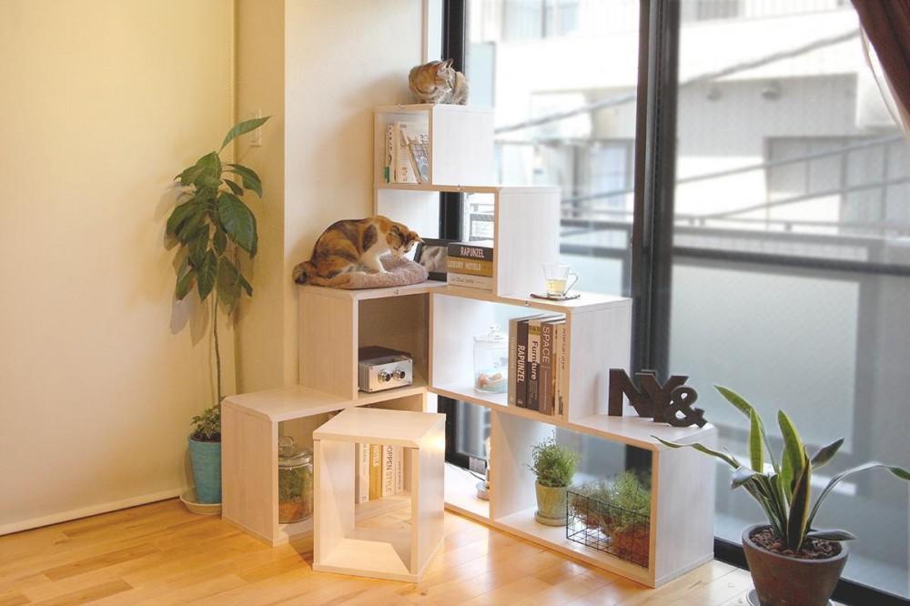 NY&〜部屋に新しいスペースを生む、人と猫のための家具ニャンド〜 (猫家具NY&を窓辺に)