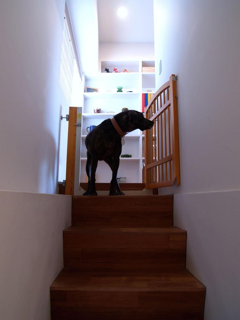 FEMTE-愛犬と暮らしやすい「戸建て風」リノベ (階段)