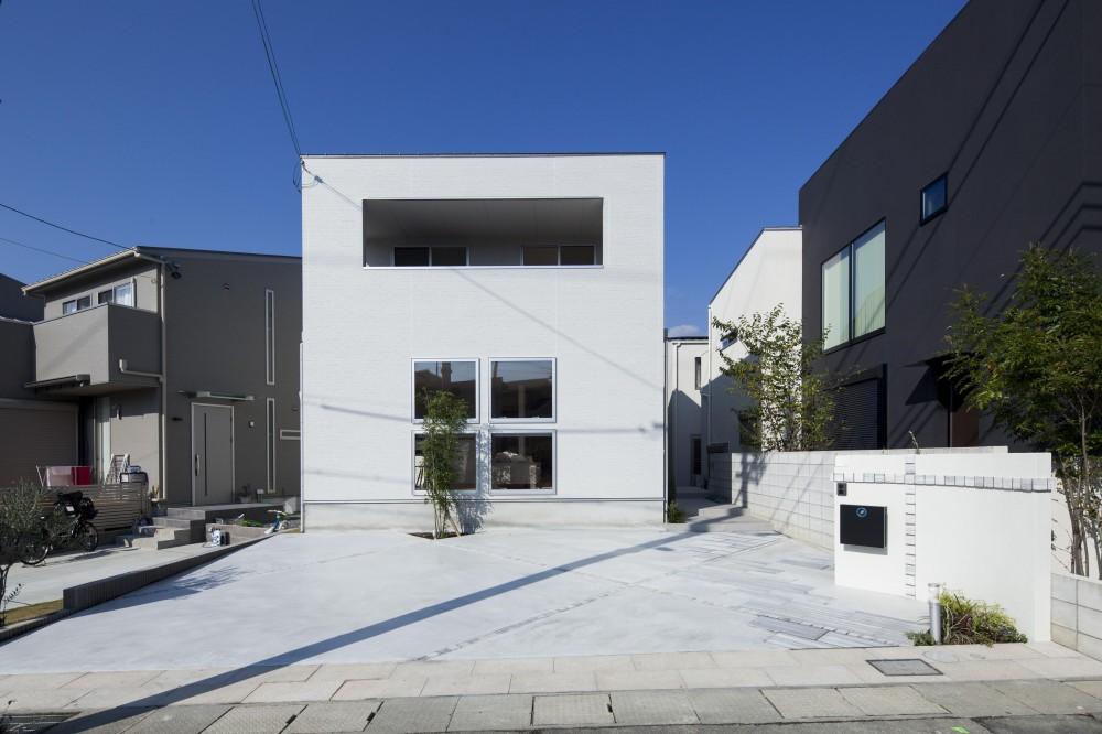 white square box (外観)