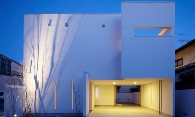 WHITE   BOX (夜景)