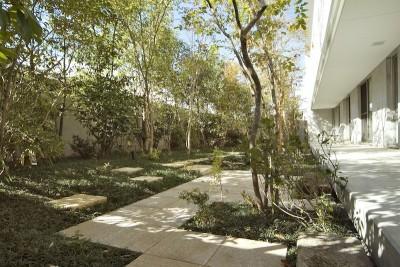 外観(南面庭) (kirishima-no-ie   屋根も壁も、コンクリート打放しの仕上げです。)