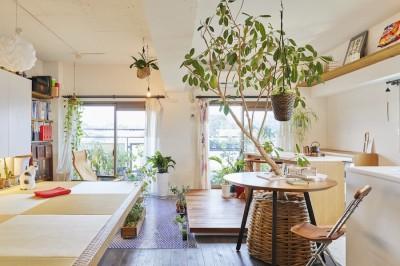 リビング (Shan shui house-猫と植物と山水画のような空間に暮らす)
