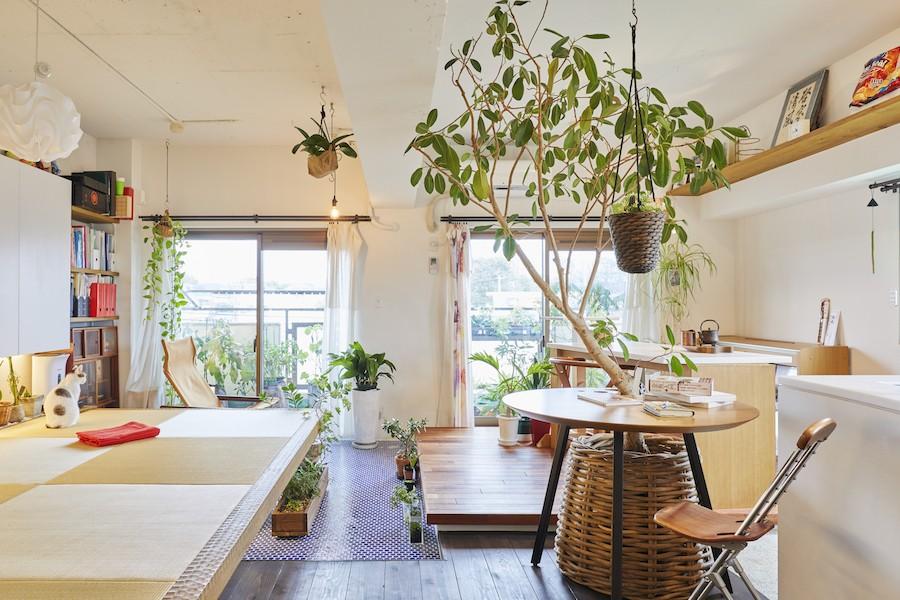 リビングダイニング事例:リビング(Shan shui house-猫と植物と山水画のような空間に暮らす)