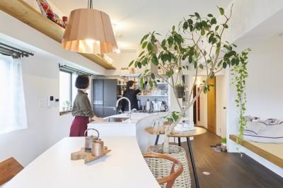 キッチン (Shan shui house-猫と植物と山水画のような空間に暮らす)