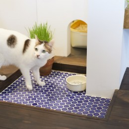 Shan shui house-猫と植物と山水画のような空間に暮らす (猫のトイレ)