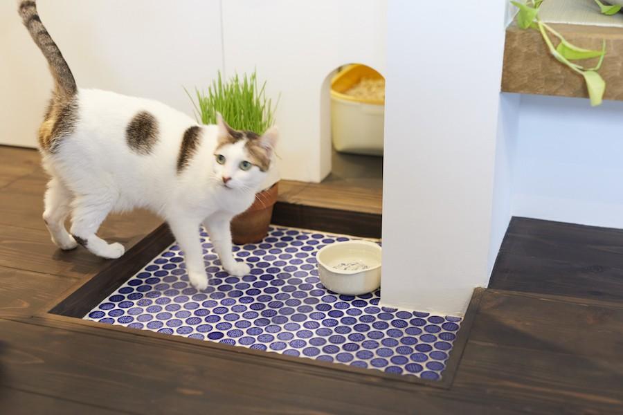 バス/トイレ事例:猫のトイレ(Shan shui house-猫と植物と山水画のような空間に暮らす)