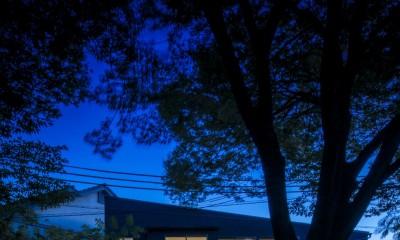 夜景|緑豊かな公園に隣接|プライバシーを守りながら開放的に住まう Y字路の家
