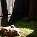 円居の写真 庭