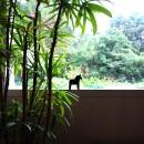 鵜沼のアトリエの写真 窓から見る外空間
