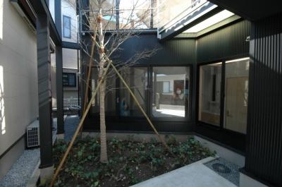 18坪の土地に建つ中庭型住宅 (中庭)