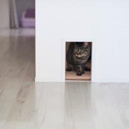 愛猫もうれしい、住み替えなしのリノベーション。20年来の我が家をグッと快適に。 (ネコトンネル、ネコトイレ)