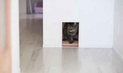 愛猫もうれしい、住み替えなしのリノベーション。20年来の我が家をグッと快適に。