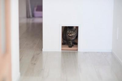 ネコトンネル、ネコトイレ (愛猫もうれしい、住み替えなしのリノベーション。20年来の我が家をグッと快適に。)