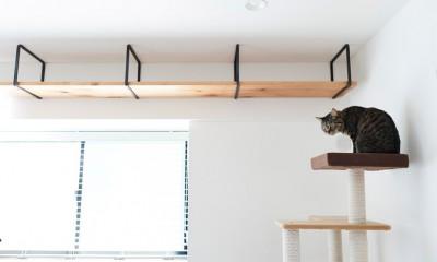 愛猫もうれしい、住み替えなしのリノベーション。20年来の我が家をグッと快適に。 (キャットウォーク)