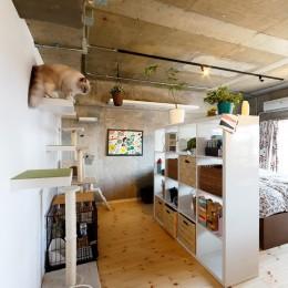 猫と暮らす無垢フローリングの家