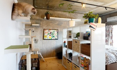猫と暮らす無垢フローリングの家 (こだわりのキャットウォーク)