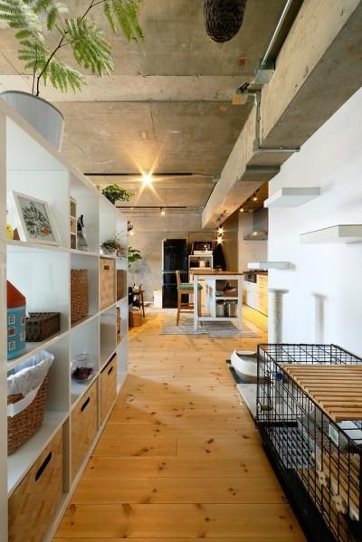 猫と暮らす無垢フローリングの家 (パイン材の無垢材のフローリング)