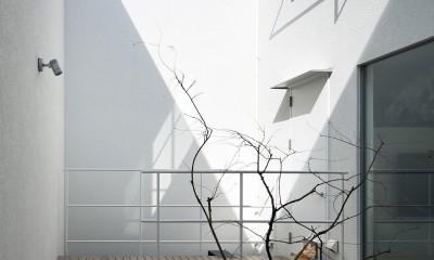 帝塚山の家 (テラス2)