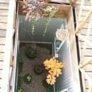 家族のびのび大空間:自然素材の家の写真 中庭