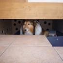 ペット(愛犬)と暮らす広いリビングが中心の自然素材住宅の写真 愛犬≪姫≫のスペース