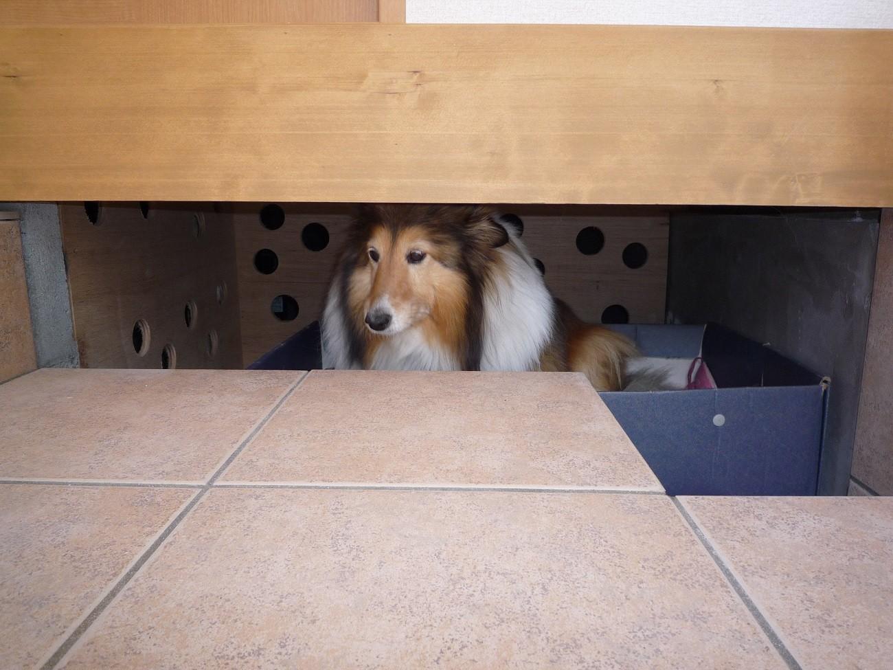 玄関事例:愛犬≪姫≫のスペース(ペット(愛犬)と暮らす広いリビングが中心の自然素材住宅)