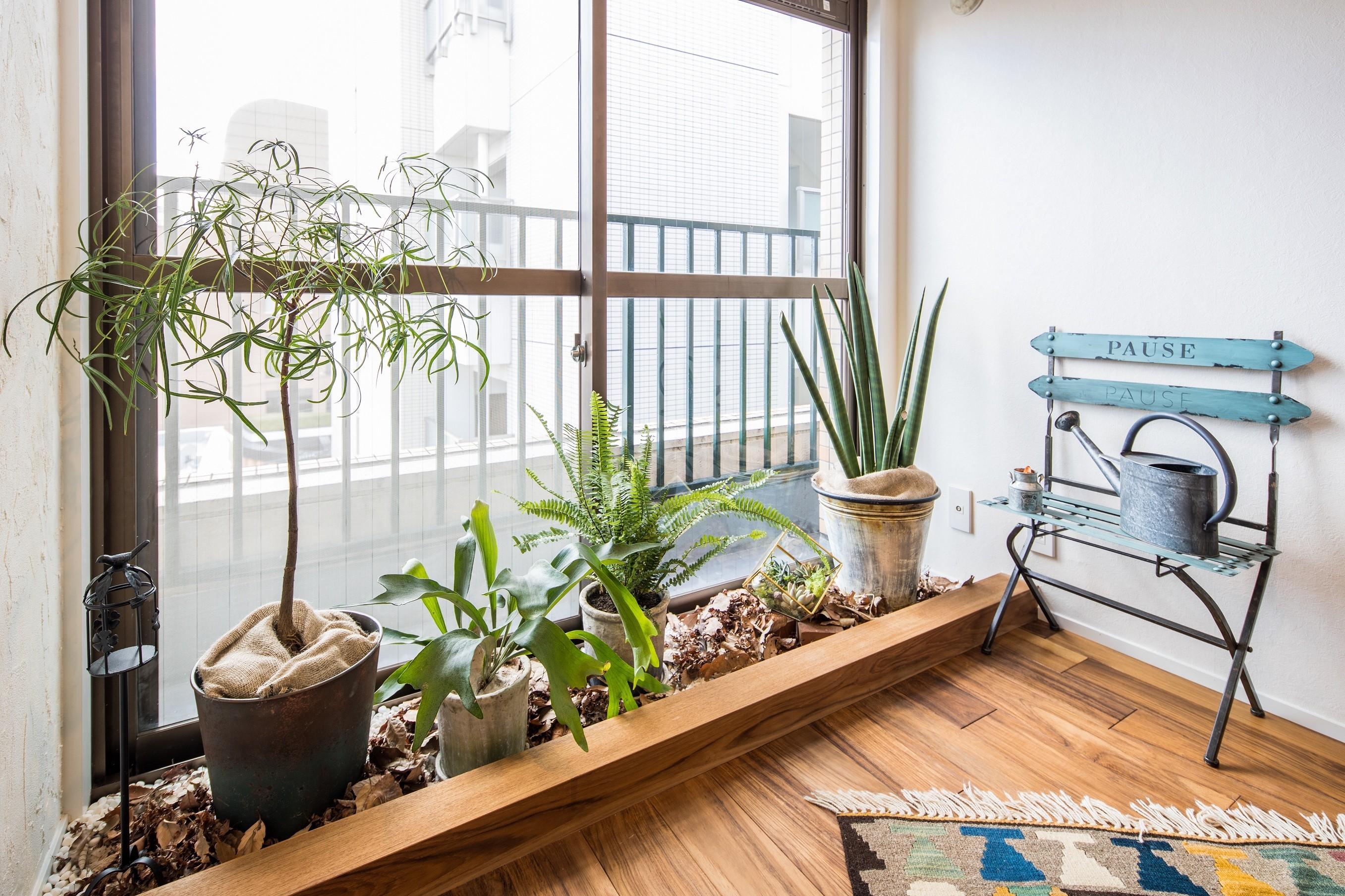 リビングダイニング事例:窓際には観葉植物コーナー(アウトドアリビングの暮らしを楽しめる家)