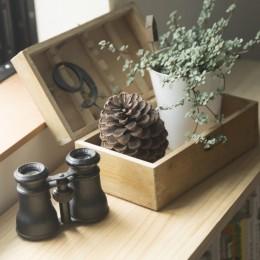 キッチンをLDKの中心に家族が繋がる家(野洲の家リノベーション) (観葉植物)