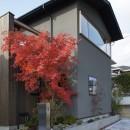 北大和の家の写真 イロハモミジ紅葉時