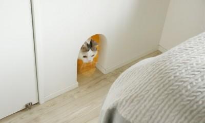 背伸びしない現実の暮らしに即しつつも、夢と遊び心はしっかりと取り入れて。 (愛猫が寝室を行き来するネコトンネル)