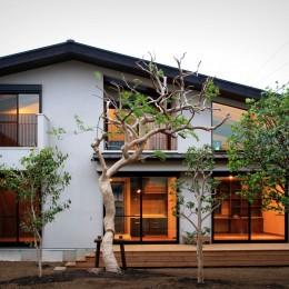 杉並の住宅 大きな切妻屋根の家 (建物外観(夜景))