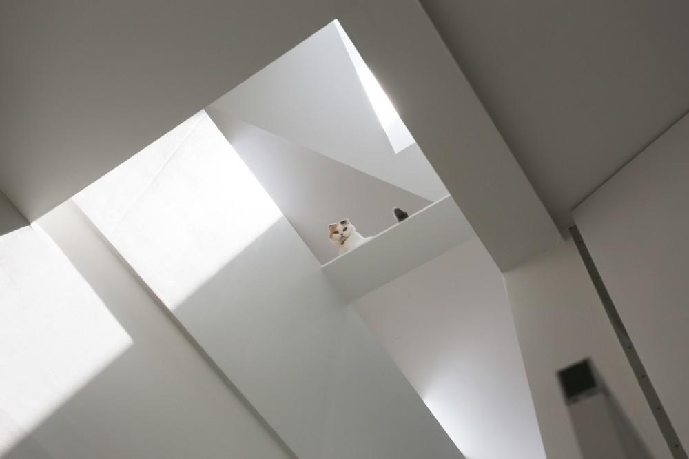 猫と住む家 横浜の二世帯住宅OUCHI-40 (猫のようす)