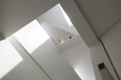 猫のようす (猫と住む家 横浜の二世帯住宅OUCHI-40)