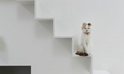 猫と住む家 横浜の二世帯住宅OUCHI-40 (猫の様子)