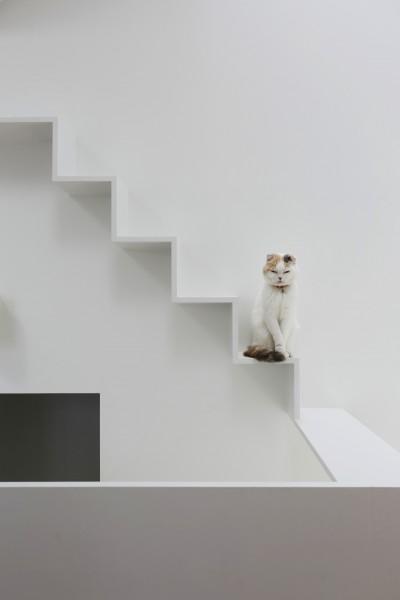 猫の様子 (猫と住む家 横浜の二世帯住宅OUCHI-40)