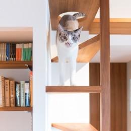 Mさんの家 (三角板の猫用クライミングタワー)