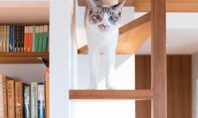 南越谷Mさんの家 (三角板の猫用クライミングタワー)