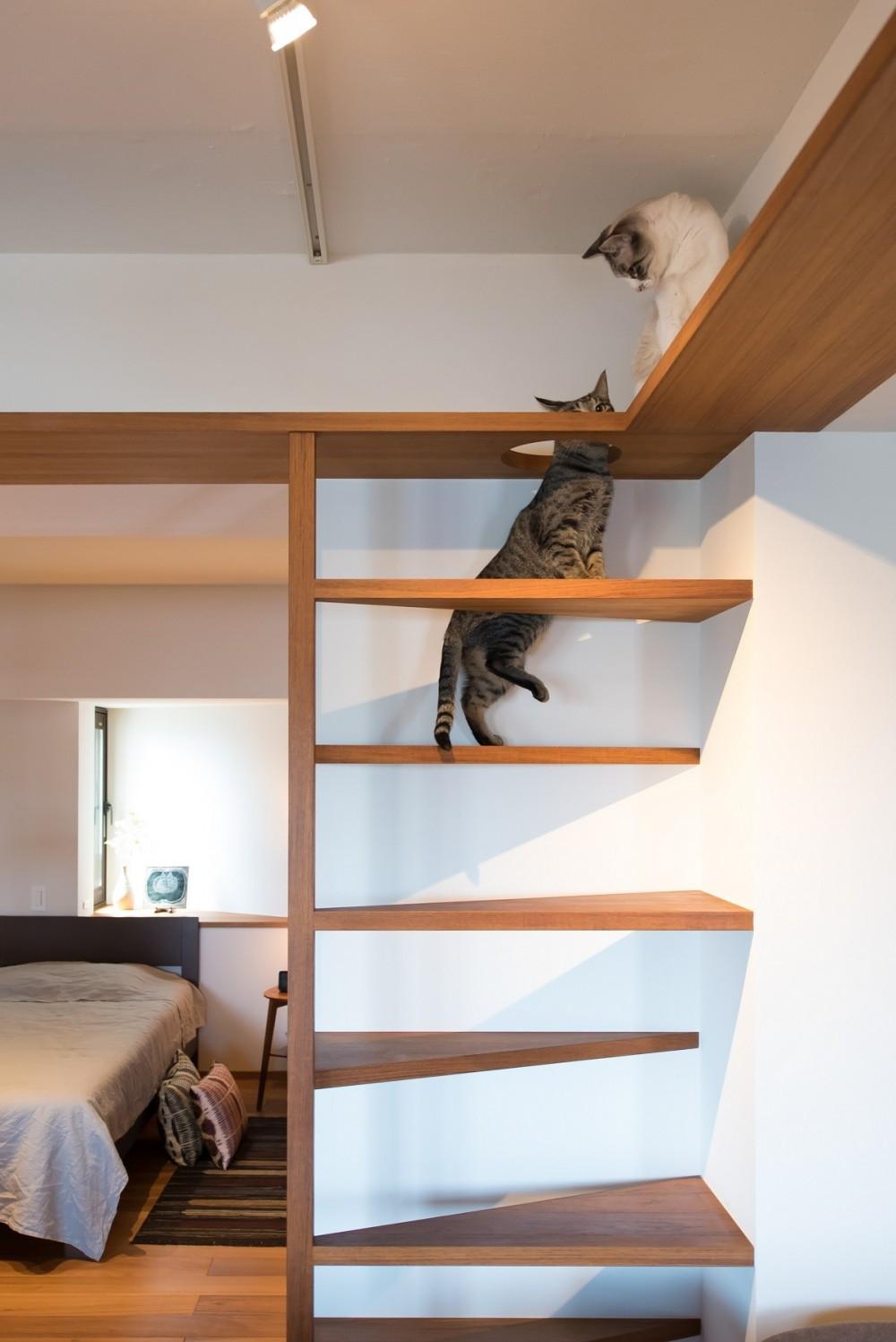 南越谷Mさんの家 (猫の遊び場)