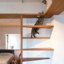 南越谷Mさんの家の写真 猫の遊び場