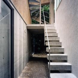 ホタルの棲む竹薮と共生 - 中庭のある15坪の狭小住宅|春日町の家 (中庭)