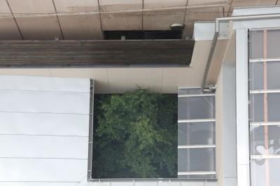 中庭部分 (住之江の元長屋 | ビフォーアフター放映 | 築74年の元長屋に光と風を)